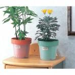 Chậu trồng cây 2 lớp hàng Nhật