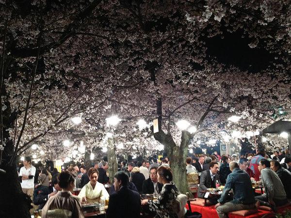 hanami people night 64 Tìm hiểu về Bento   Nghệ thuật của xứ sở  Mặt trời mọc