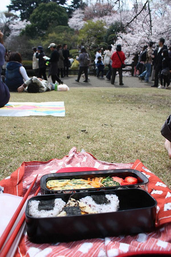 japans fav pastime and food together 64 Tìm hiểu về Bento   Nghệ thuật của xứ sở  Mặt trời mọc